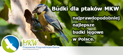 MKW Pracownia