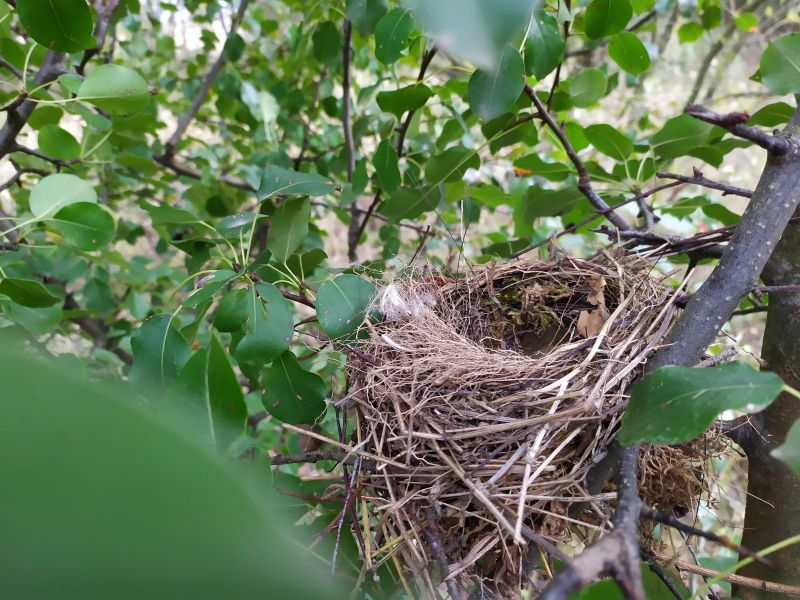 Ekspertyza ornitologiczna